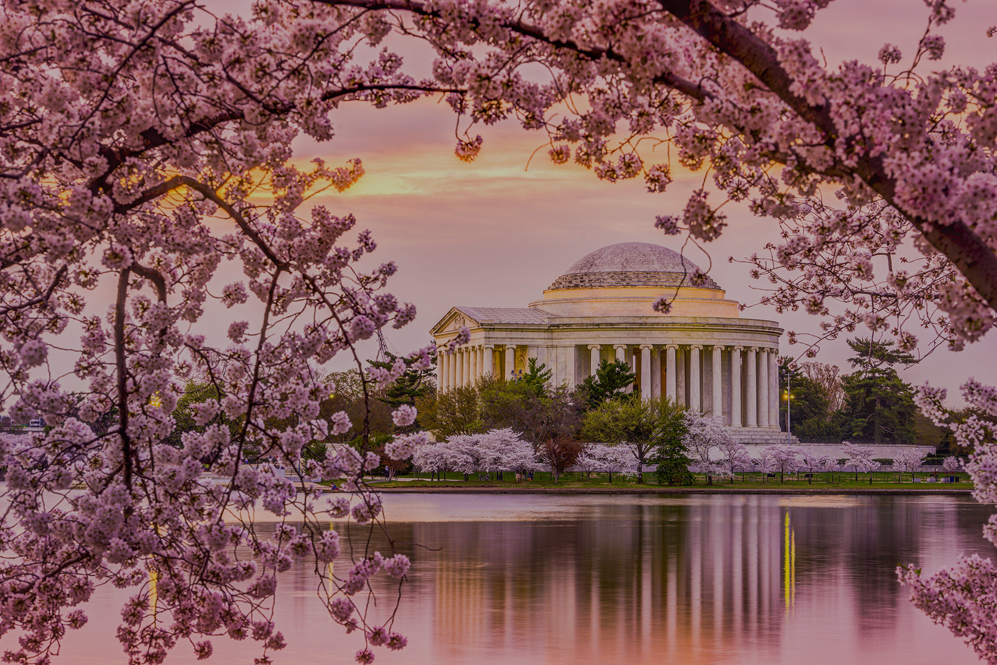 Photos of the cherry blossoms at the Tidal Basin